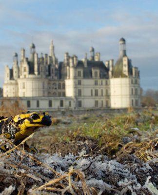 où trouver la alamandre tachetée devant le Château de Chambord