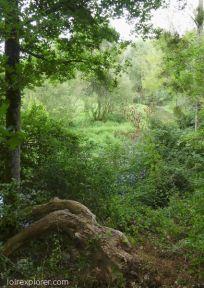 Réserve naturelle de Grand Pierre et Vitain mégalithe dolmen menhir tombe néolithique préhistoire région Centre Loir et Cher