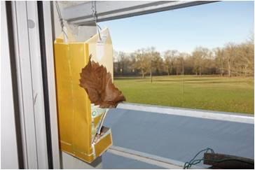 Comment aider les oiseaux en hiver fabriquer une mangeoire