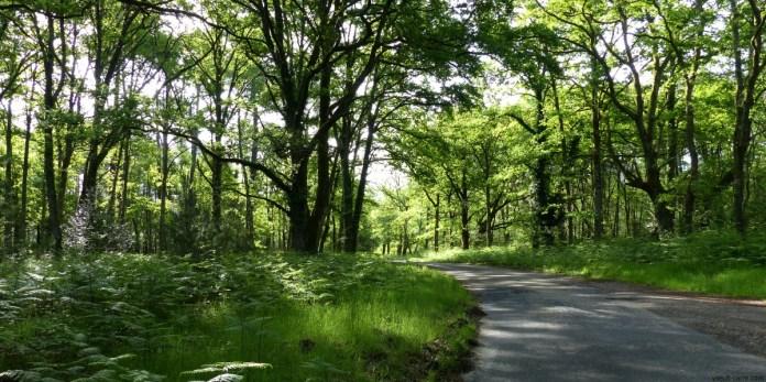 Petite route de campagne en Sologne au printemps copyright Yseult carré
