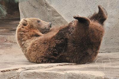 【優しいね♪】水に落ちたカラスを助けた熊さんの動画☆