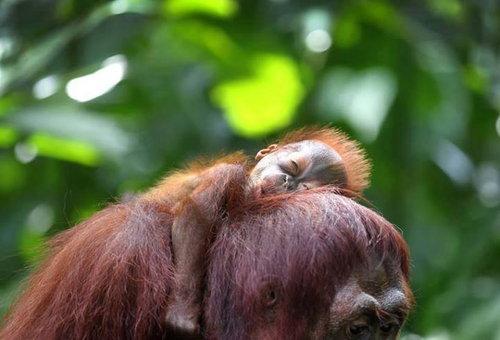 【熱帯雨林を守ろう】~日々の生活の中でできること~