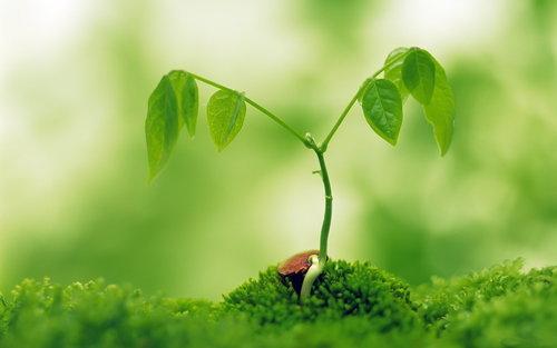 有機栽培の落とし穴と自然則