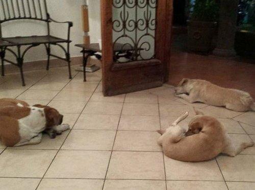 エサを与えてくれた心優しい女性の葬儀に、野良犬たちが参列