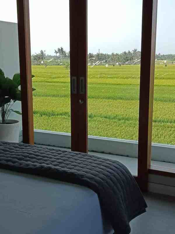 room with ricefield view