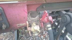 Mörrums bruk 12 juni. En fågel i Värö har nog blivit bostadslös.