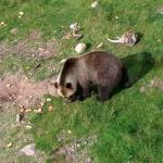 Orsabjörnpark