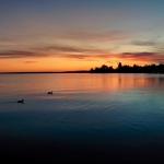 Enten im Sonnenuntergang