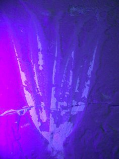 תצלום בקרינה על-סגולה (UV) של זרועות Keuppia levante