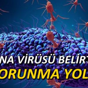 Koronavirüs (Covid-19) Nedir