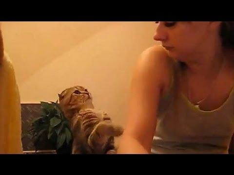 Os gatos também pedem mimos aos donos