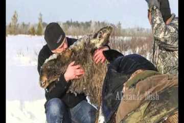 Pessoas que arriscam a própria vida para salvar animais