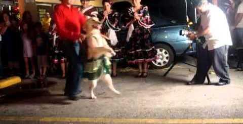 Cão a dançar merengue