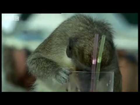 Aqui podem ver as macacadas que eles fazem quando estão bêbados