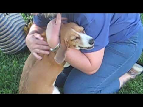 Cadela emocionada ao reencontrar donos