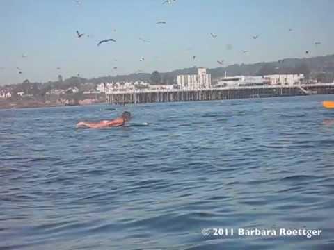 Mulher quase é engolida por baleia