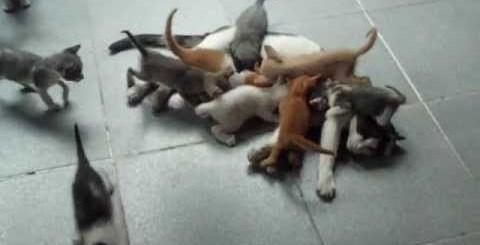 16 gatos a mamar