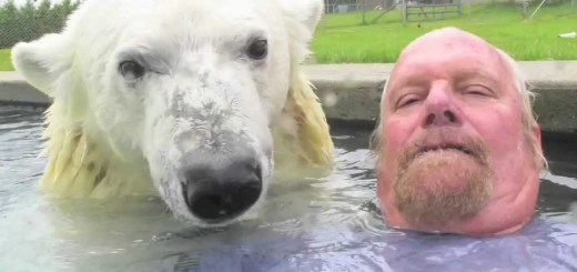 O único homem no mundo que consegue nadar com um urso polar