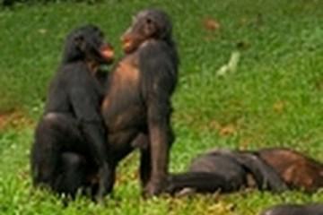 Vida de macaco é difícil