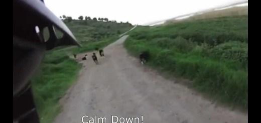 25 cães furiosos atacam ciclista
