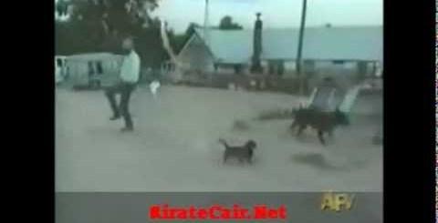 O cão pirotécnico