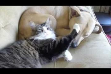 Cão e gato apaixonados