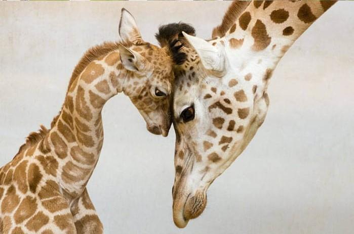 animais e a suas crias