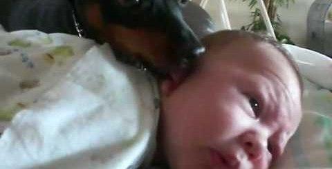 Cão faz companhia a bebé como se fosse sua cria