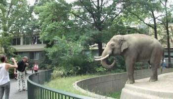 Elefante atira merda a visitante