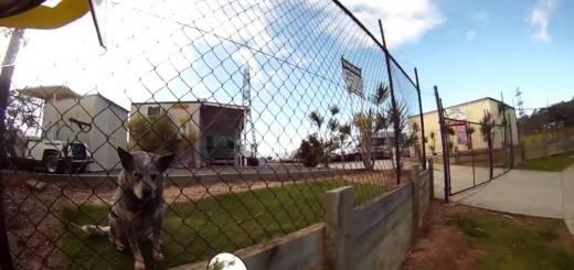Carteiro faz vídeo para mostrar sua curiosa rotina com cães