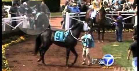 homem enfrenta cavalo