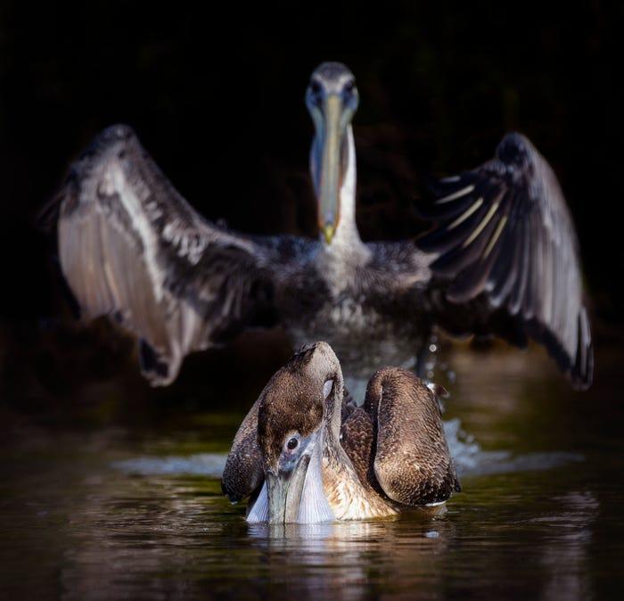 Vida selvagem em fotos hilariantes - Abracadabra
