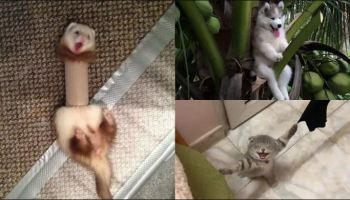 Animais de estimação ficam presos e precisam de ser resgatados