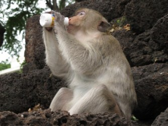 monkey-temple-lopburi