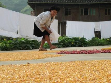 donna che secca il mais e il peperoncino