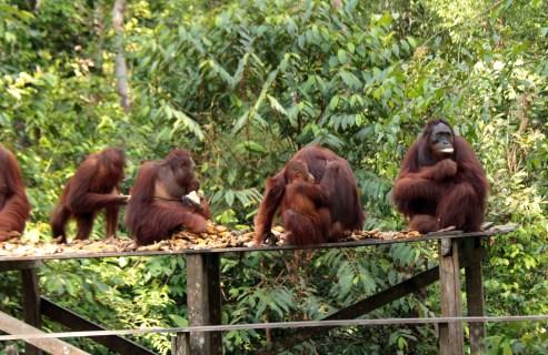 Feeding time, Pondok Tangui