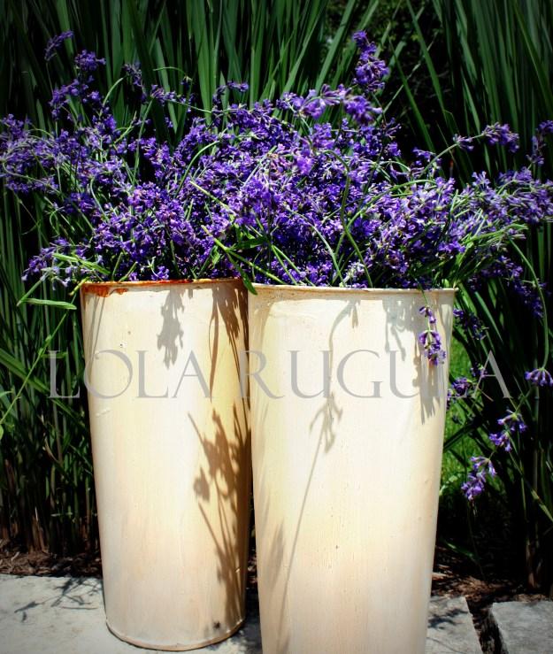 lola rugula lavender