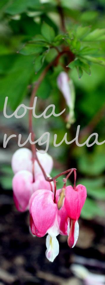 lola_rugula_bleeding-heart