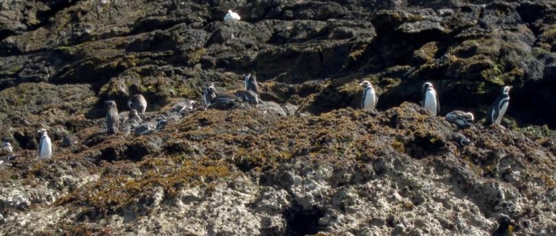 O que fazer em Chiloé: com ou sem pinguins, passeios pro ano todo!