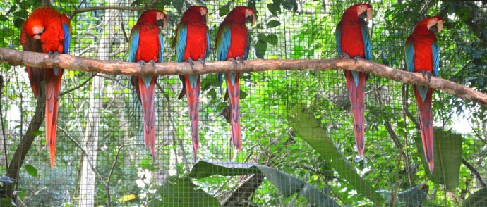 Parque das Aves: as perguntas que você queria fazer respondidas