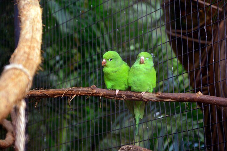 Parque das Aves - Passarinhos