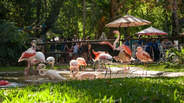 Parque das Aves - Restaurante
