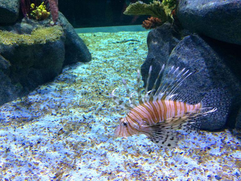 AquaRio - Peixe diferente