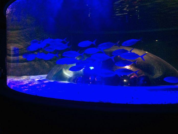AquaRio - Tanque de base côncava