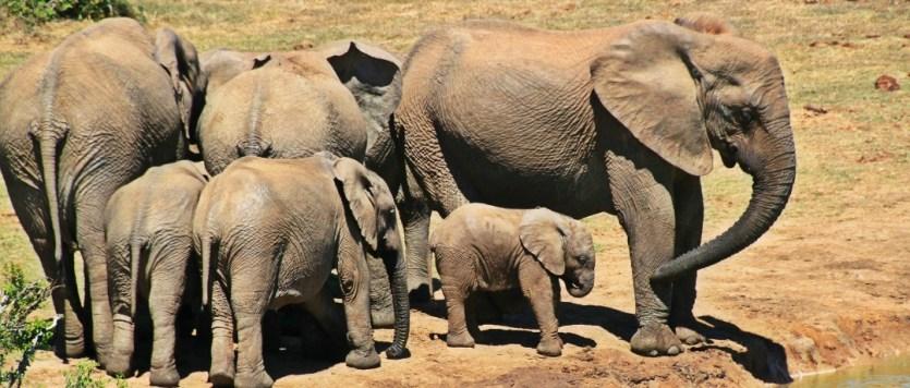 Direto da África do Sul   2 dicas que fazem diferença na ida ao Kruger