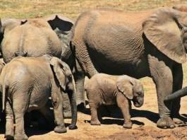 Kruger - África do Sul - Capa