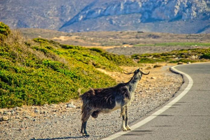 Roadtrip - África do Sul - 5