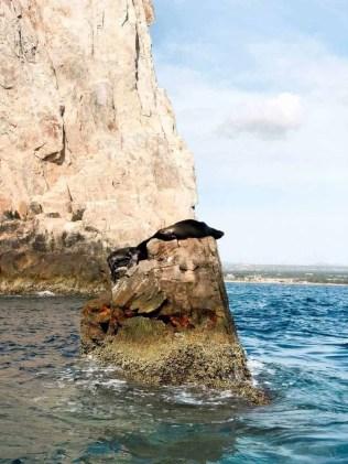 Cabo San Lucas Blog - Seal Spotting