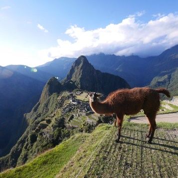 Machu Picchu with llama - Late afternoon