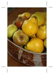 pommes coings
